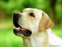 Завести собаку — полезно для здоровья