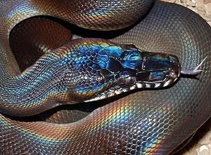 Новый 2013 год под знаком Змеи