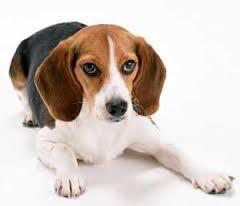 Для людей, рожденных в год Собаки, совместимость – не проблема. Часть 1