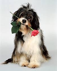 Для людей, рожденных в год Собаки, совместимость – не проблема. Часть 2
