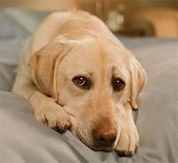 Для людей, рожденных в год Собаки, совместимость – не проблема. Часть 3