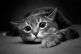 Что нужно знать, заводя кошку