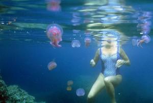 Опасные медузы