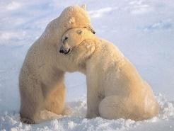 обнимаем любимых