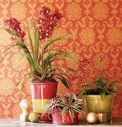 Цветоводство как увлекательное хобби